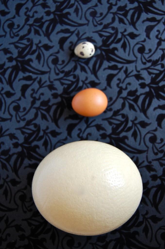 ostrich egg2