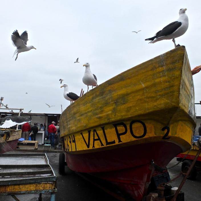 Valparaiso fish market